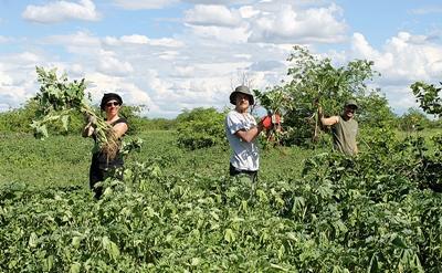 Volunteers remove invasive plants in South Africa