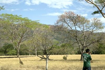 Conservation volunteer conducts a bird survey
