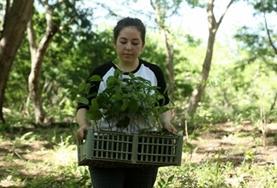 Volunteer Costa Rica